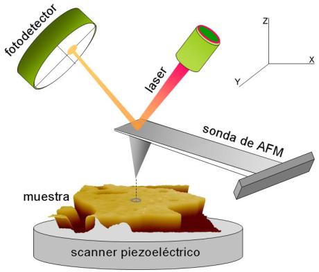 Esquema-de-un-AFM-La-sonda-se-mantiene-en-contacto-con-la-superficie-de-la-muestra-la